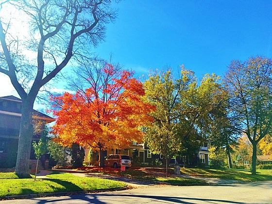 Fall in Rochester
