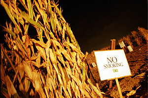 Cornfield Maze in La Union, New Mexico